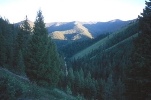 Bitterroot-Forest