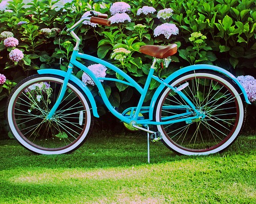 Turquoise Beach Cruiser Amongst The Hydrangeas - 8 x 10 Photography Print