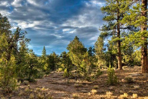 Desert National Wildlife Range