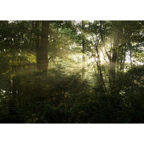 The Sunlight and the Woods - photograph, card or bookmark of golden sunlight shining through the green trees in the woods.