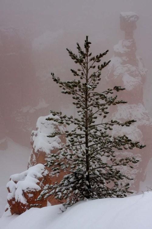 Bryce tree fog